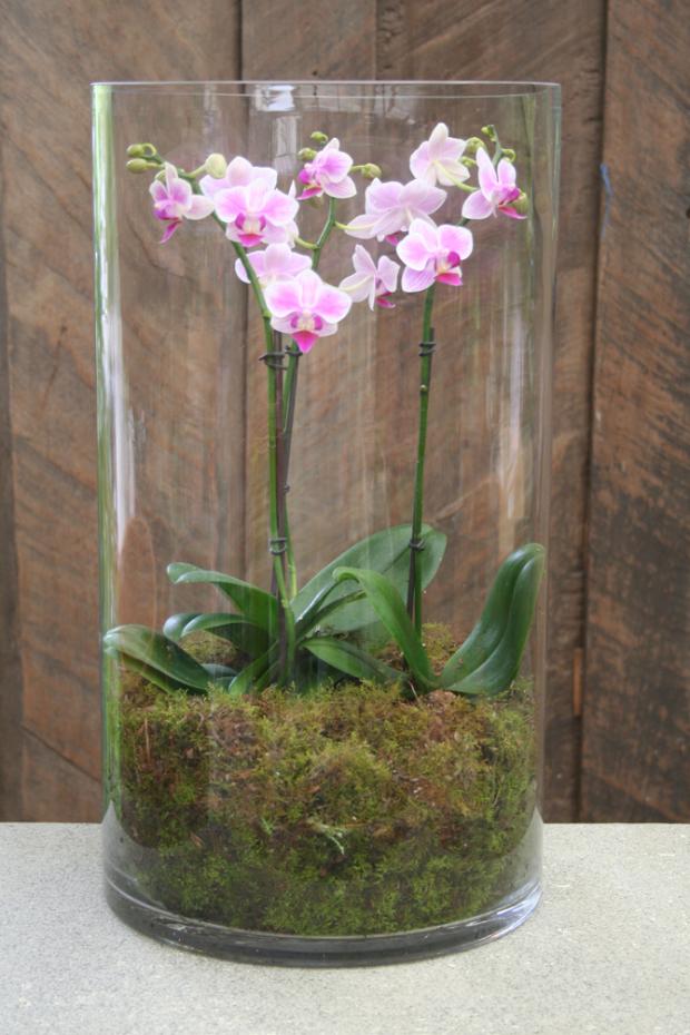 orchid phalaenopsis display vase dwell pinterest orchid es plantes et jardins. Black Bedroom Furniture Sets. Home Design Ideas
