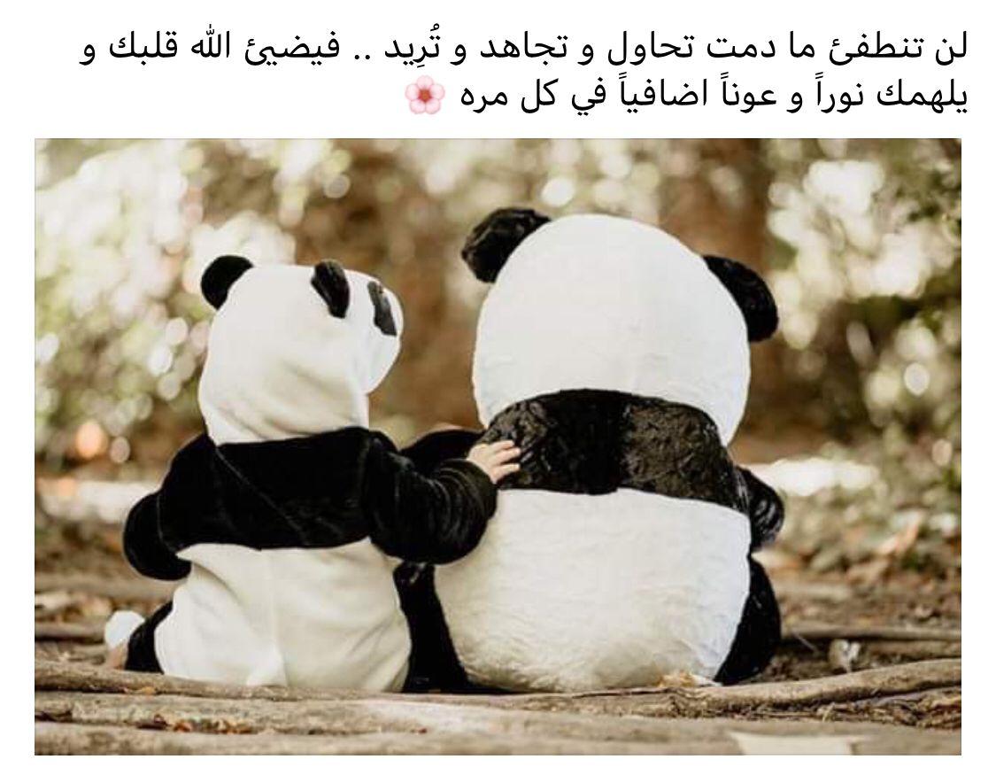 Pin By صورة و كلمة On مواعظ خواطر إسلامية Panda Bear Islamic Quotes Qoutes