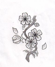 Japanese Cherry Blossom Drawing Black And White Google Search Cherry Blossom Drawing Flower Drawing Cherry Blossom Flowers