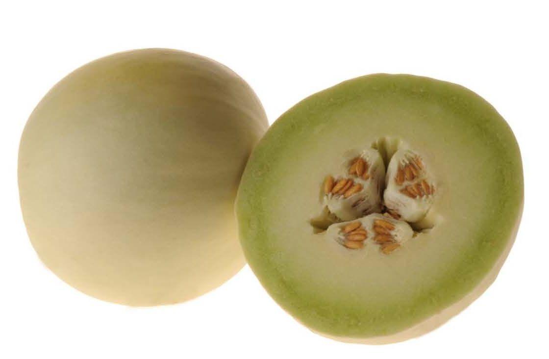 Dewlightful F1 Melon Honeydew Fruit