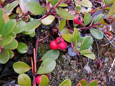 fall edible plants of pacific northwest