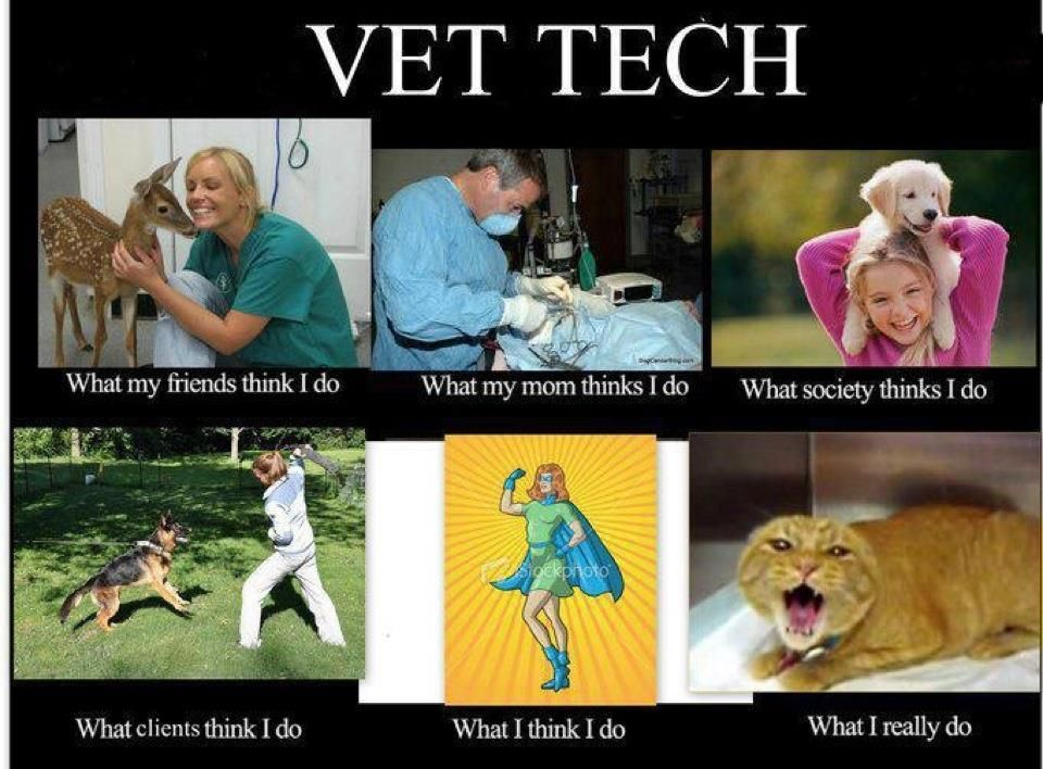 Vet Tech  Wordy    Tech Veterinary Technician And Humor