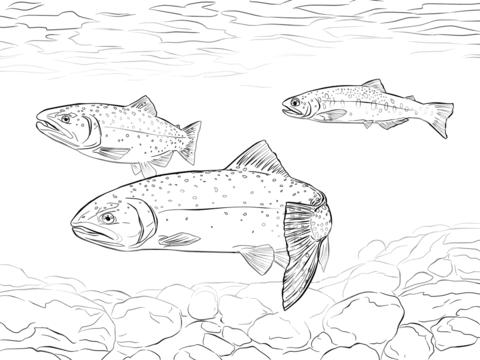 Greenback Cutthroat Trout coloring page from Trouts ...