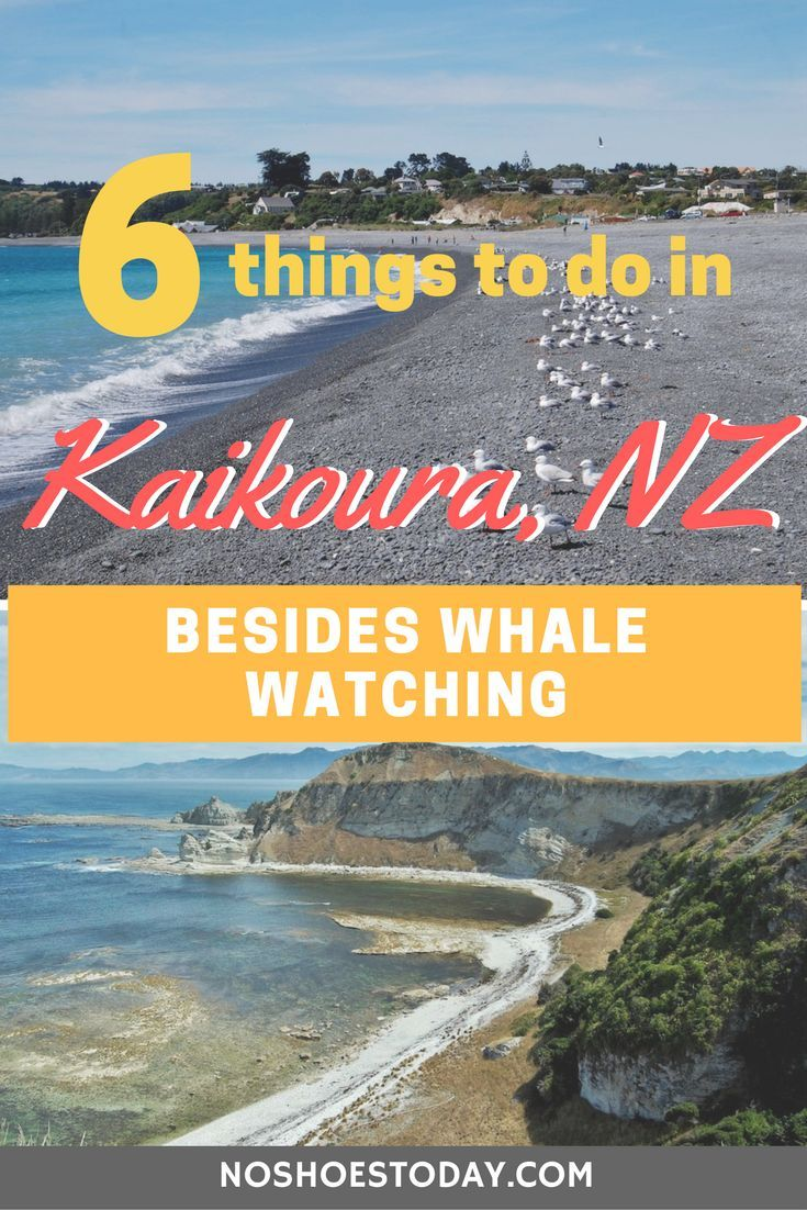 Things To Do In Kaikoura Besides Whale Watching South Island - Kid friendly new zealand 6 things to see and do