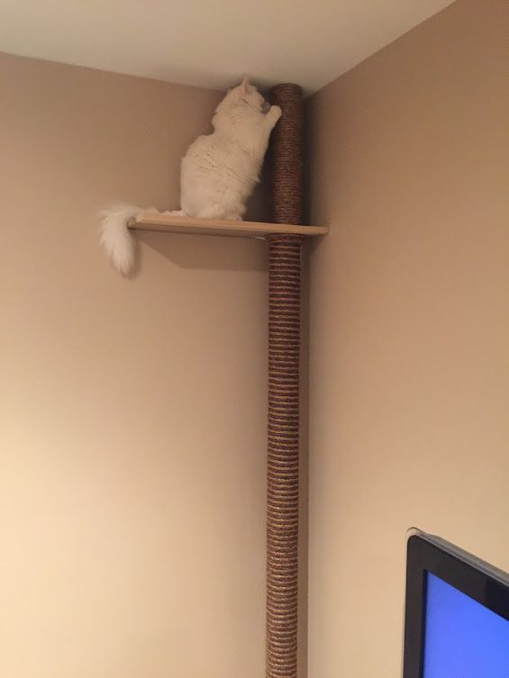 Floor To Ceiling Cat Tree With Perch Quickcrafter Diy Cat