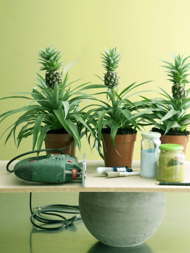 DIY: Die Ananaspflanze Als Besondere Deko Idee | Deko Ideen, Deko Und Ideen