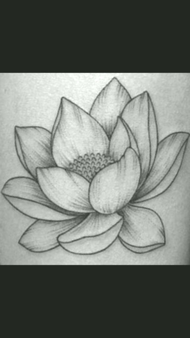 How to draw Realistic A Lotus Flower with pencil sketch