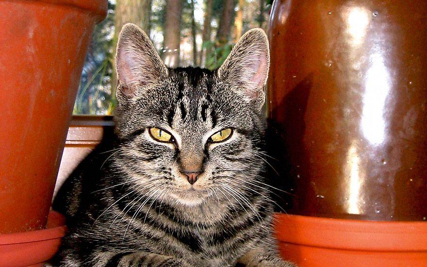 Greenpack Katze In 2020 Katzenurin Katzen Baldrian