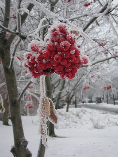 Frozen Red, Tampere, Finland Copyright: AnaMaria Mociofan