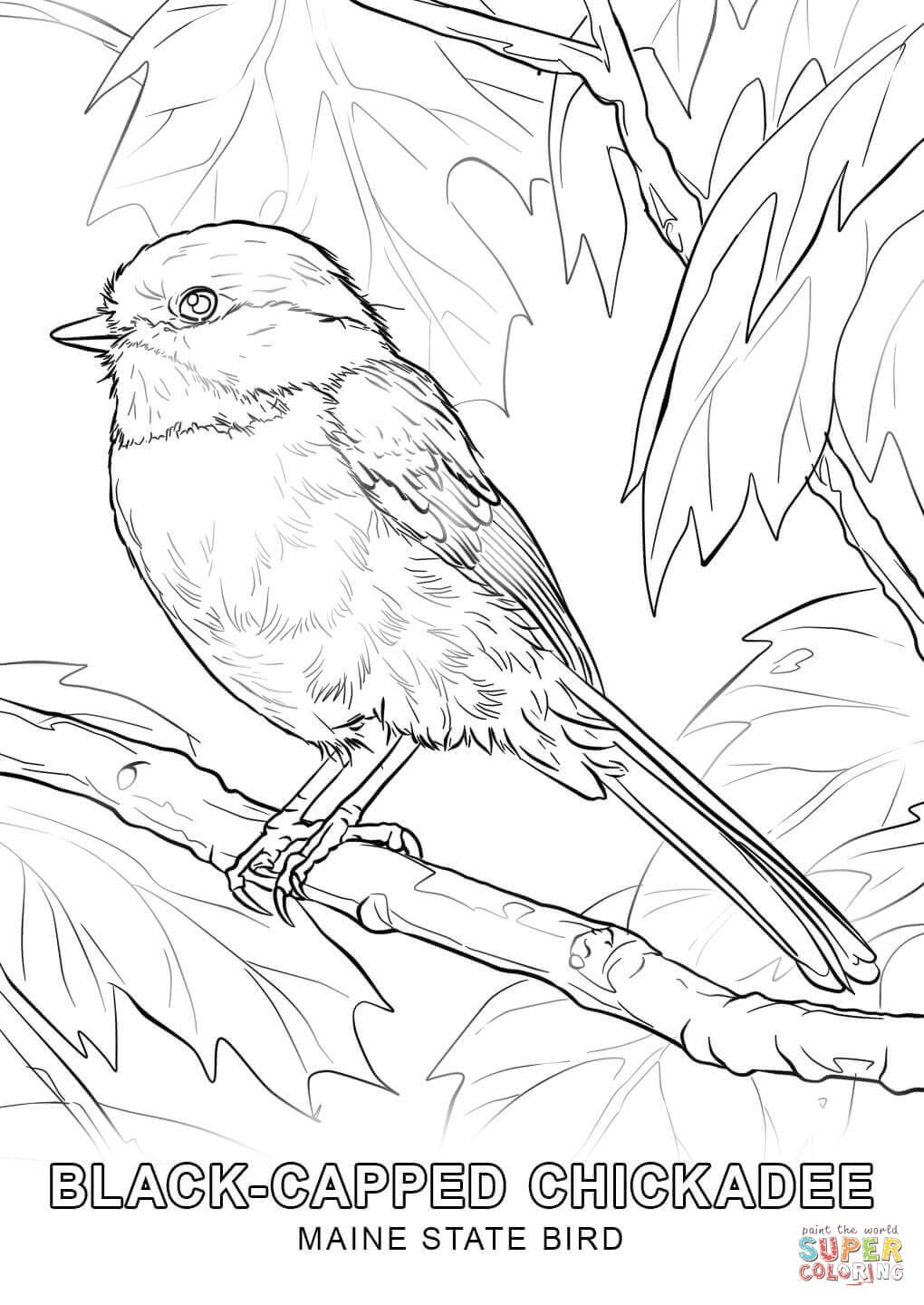 Maine State Bird Coloring Page Free Printable Coloring Pages