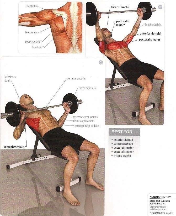 press banca inclinado en barra musculação Pinterest Musculação