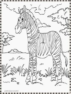 Gambar Mewarnai Zebra Gambar Mewarnai Zebra Coloring Pages