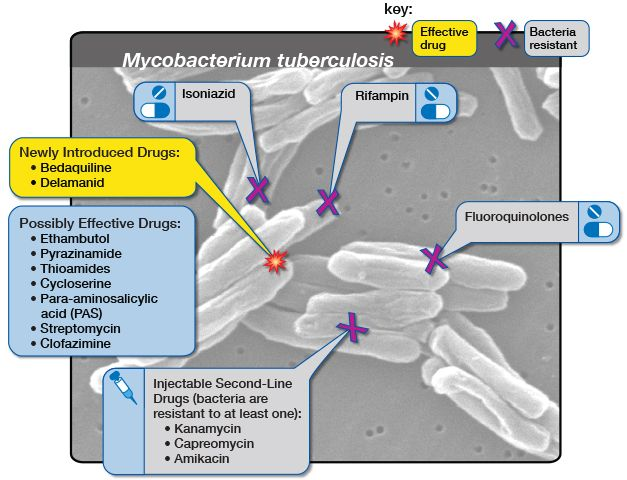 action of glyciphage
