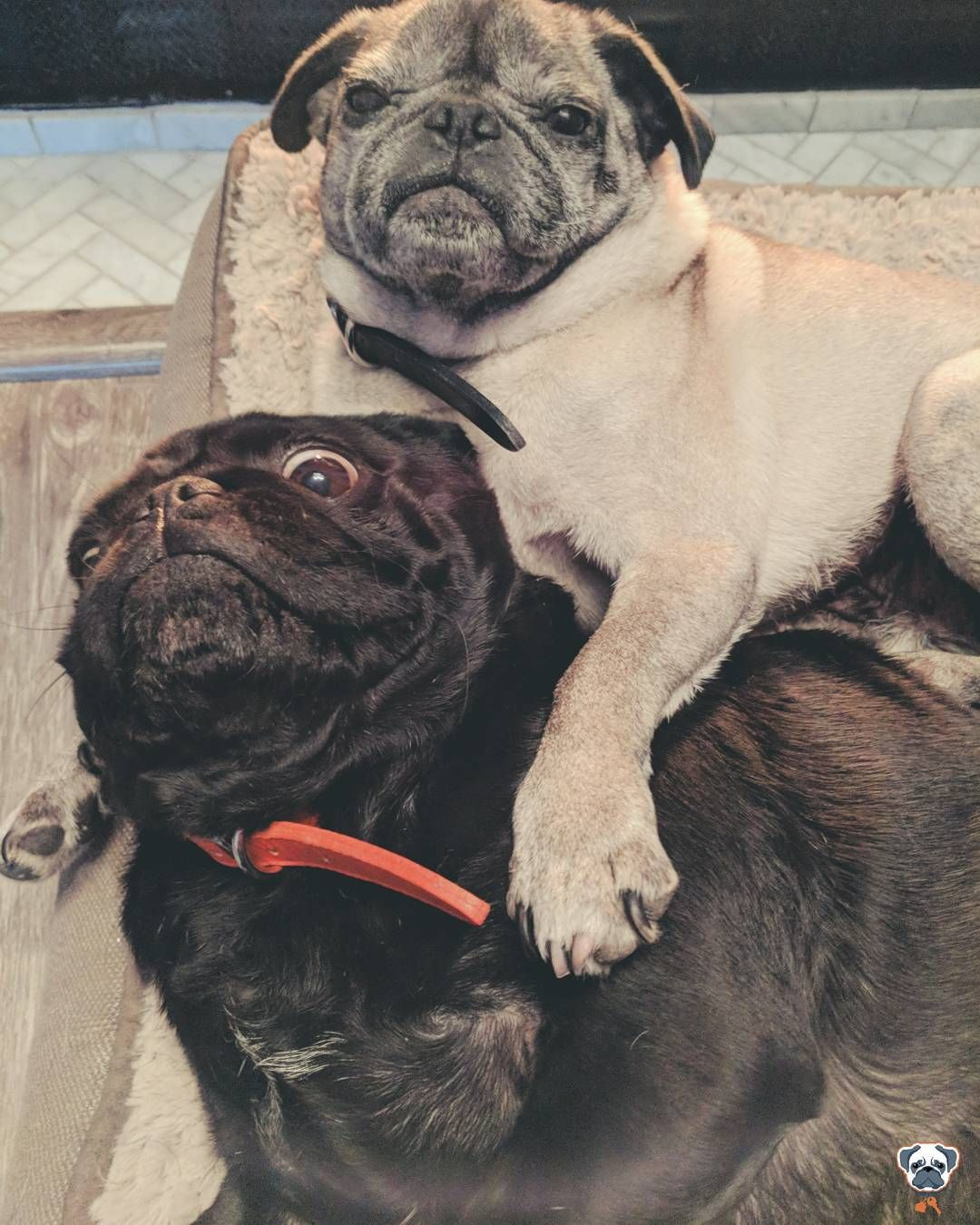 The Mortgagepug S Have Your Back We Re Always Looking Out For