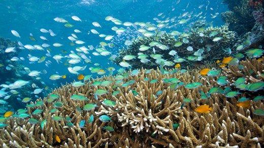 Google Afbeeldingen resultaat voor http://education.kilroyworld.nl/media/24771/indonesia-diving.jpg%3Fwidth%3D520%26height%3D292