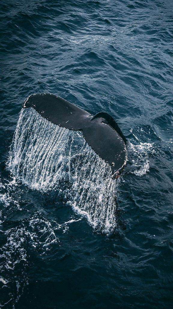 Android wallpaper HD 2018 nr824 Whale, Iphone wallpaper