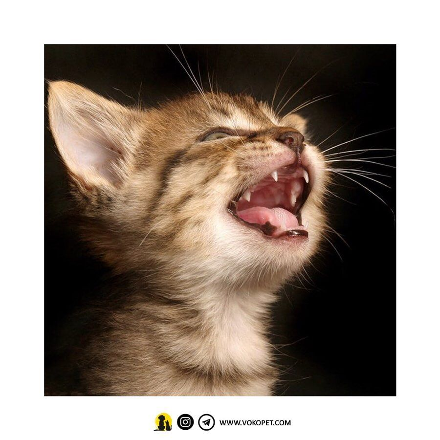 Pin By Savage Tees On Cats Of Instagram Cat Training Cats Cat Training Tricks