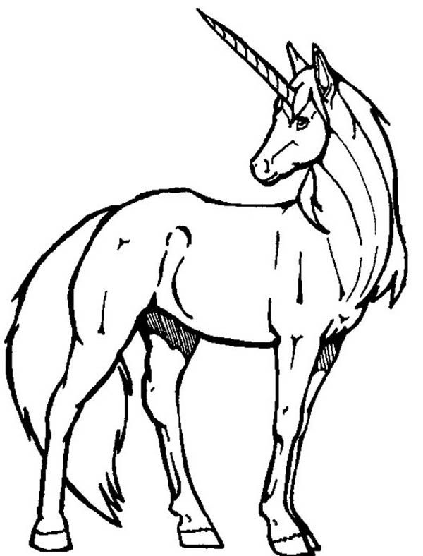 unicorn color pages Unicorn, A Realistic Drawing of