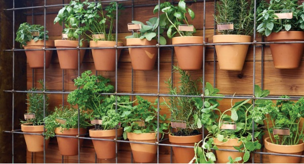 Make a Planter Wall Vegetable garden for beginners