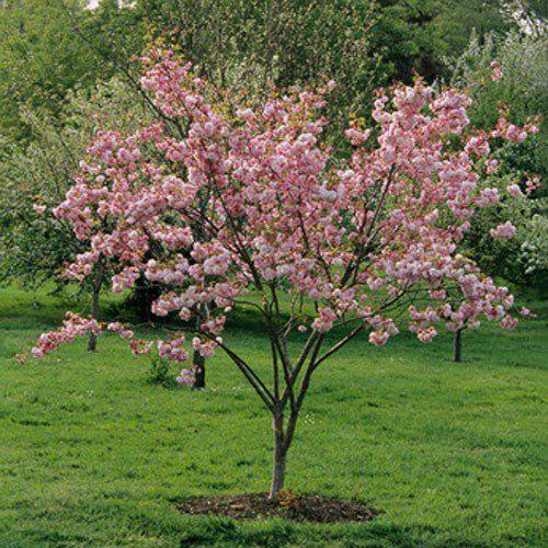 Family Garden, Ornamental Trees