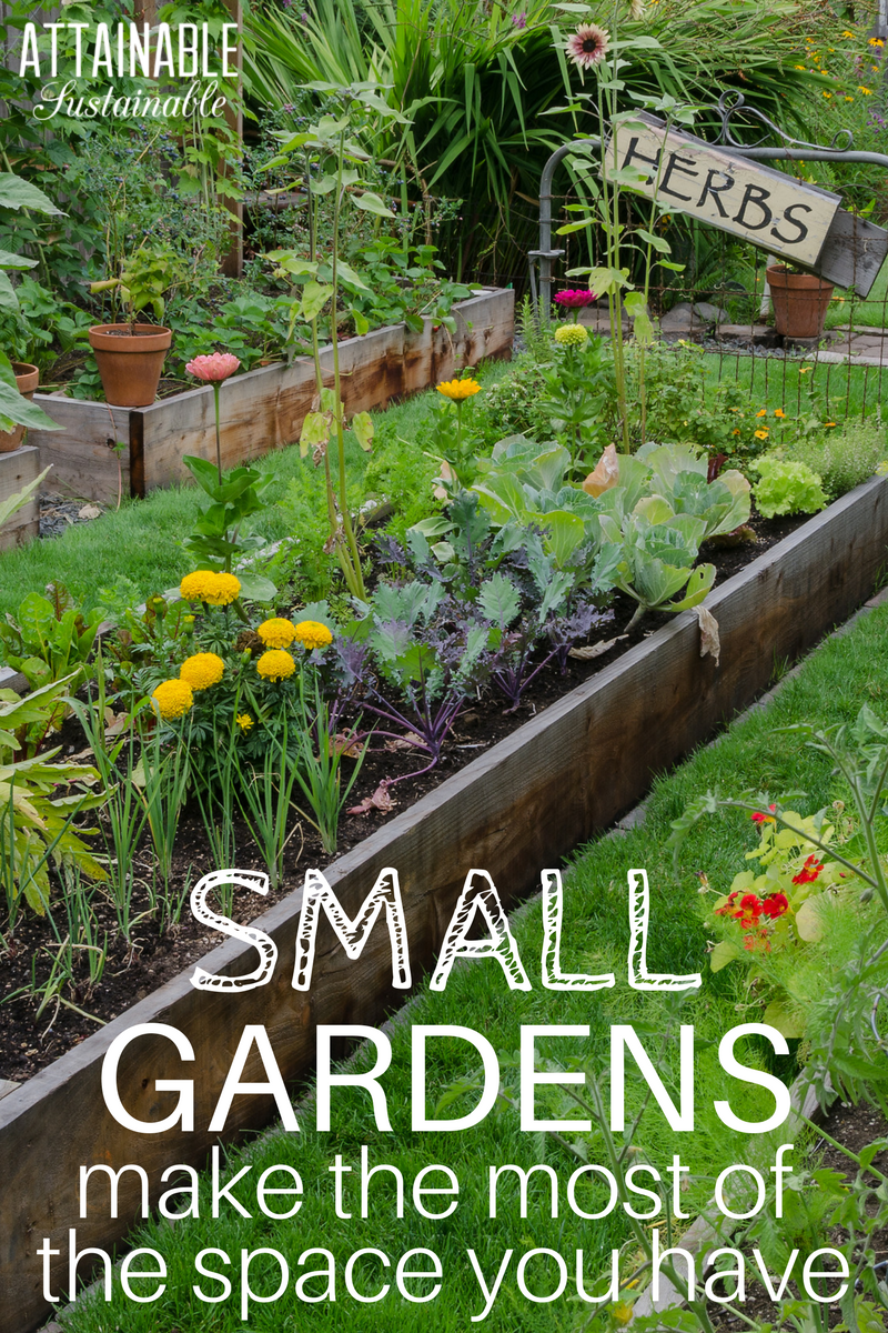 Photo of Planning a Small Garden: Maximizing Your Productive Space