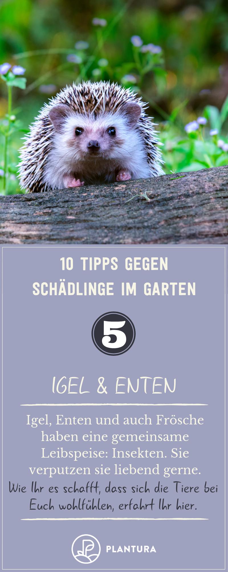 10 Hausmittel Gegen Schädlinge Im Garten Schädlinge Im Garten Ferret