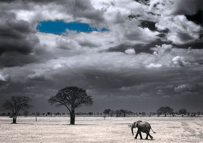 Black and white photography with color splash nature