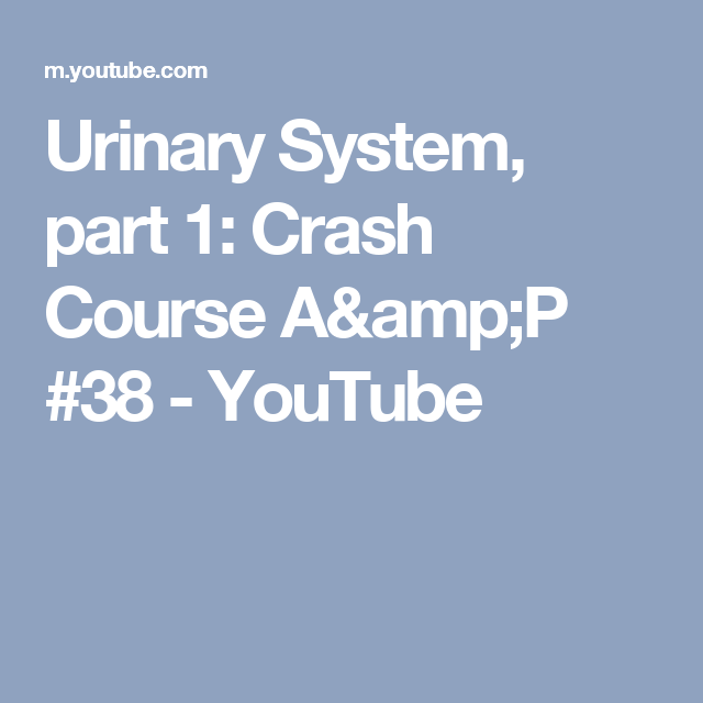 Urinary System, part 1: Crash Course A&P #38 - YouTube | Fisiología ...