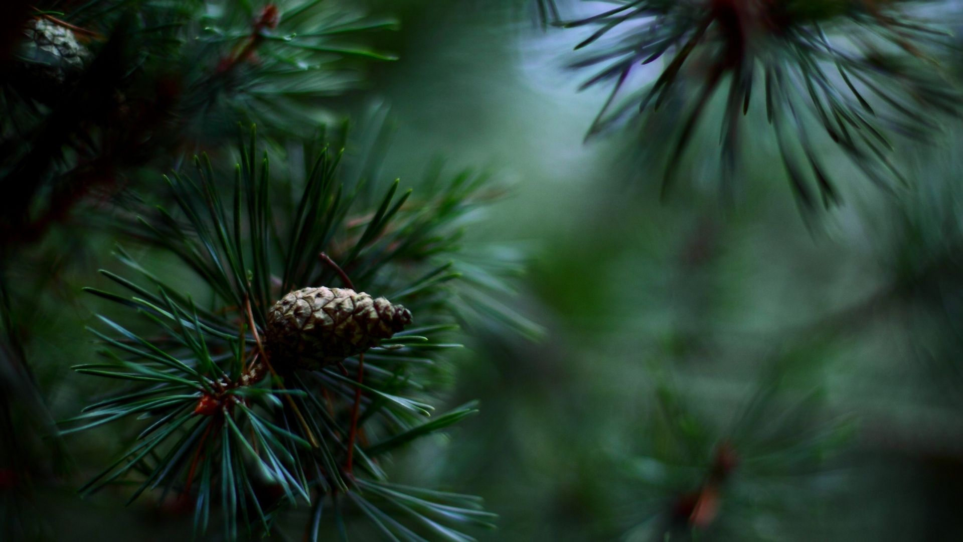 Best pine cone wallpaper border and decor images on for Pinecone wallpaper