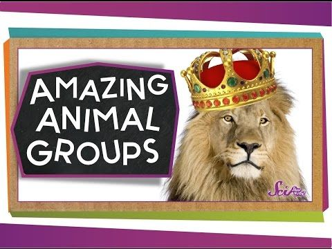 4 Animal Classification For Children Classifying