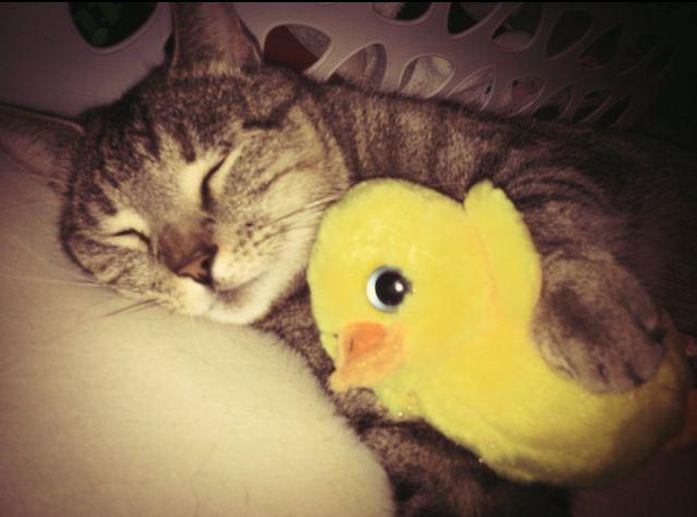 Tigger & ducky<3
