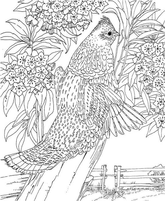 Pennsylvania Ruffed Grouse Coloring Page Purple Kitty Abstract