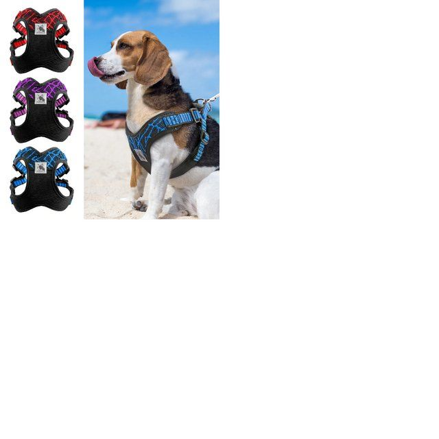Various Pet Accessories and More For Sale in Chesterfield