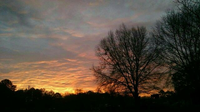 #sunrise #clouds #sun #pink #trees #pretty