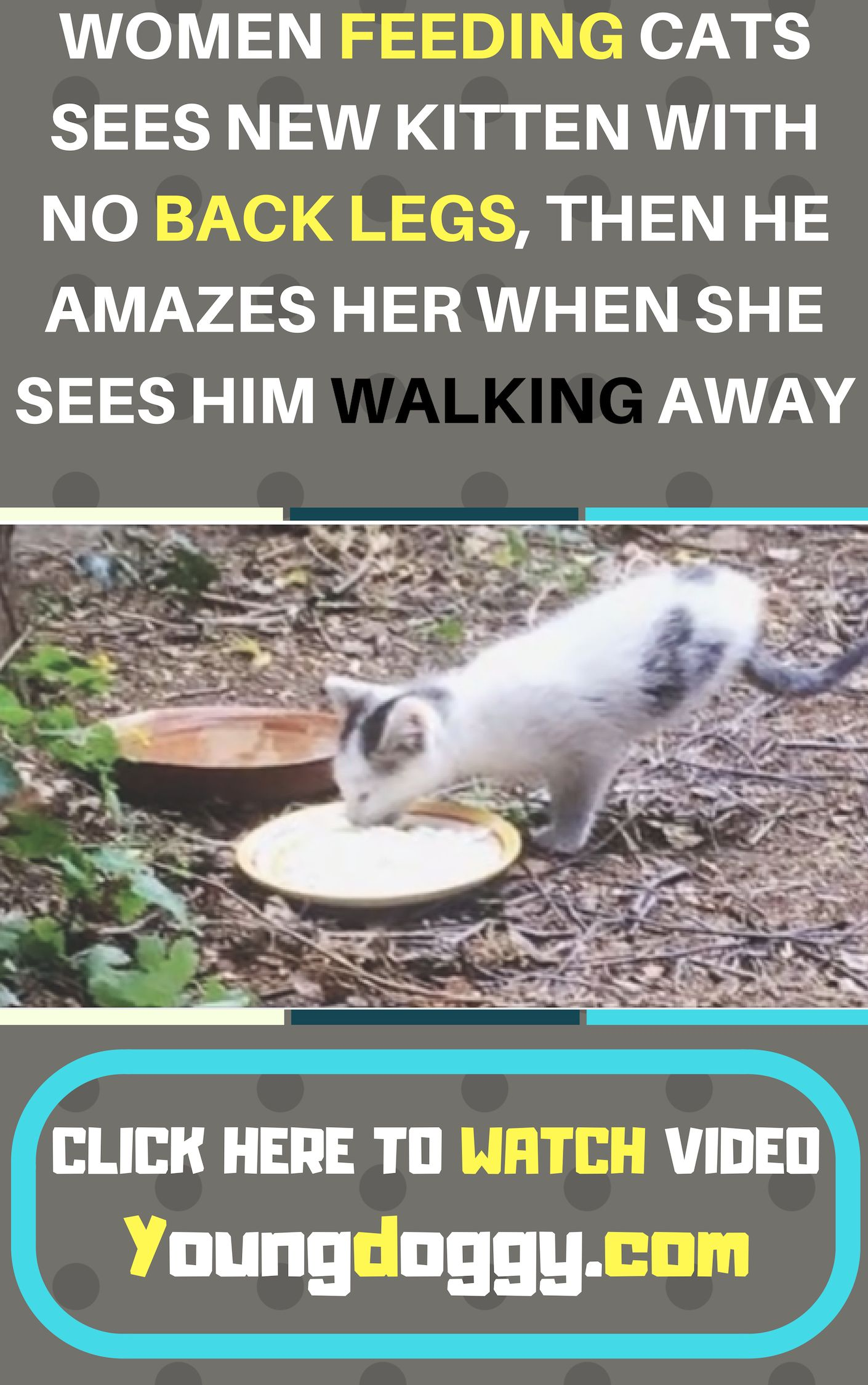WOMEN FEEDING CATS SEES NEW KITTEN WITH NO BACK LEGS, THEN HE AMAZES HER WHEN SHE SEES HIM WALKING AWAY #animalrescue