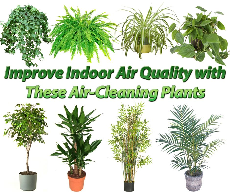 15 Best AirPurifying Plants Plants, Best air purifying