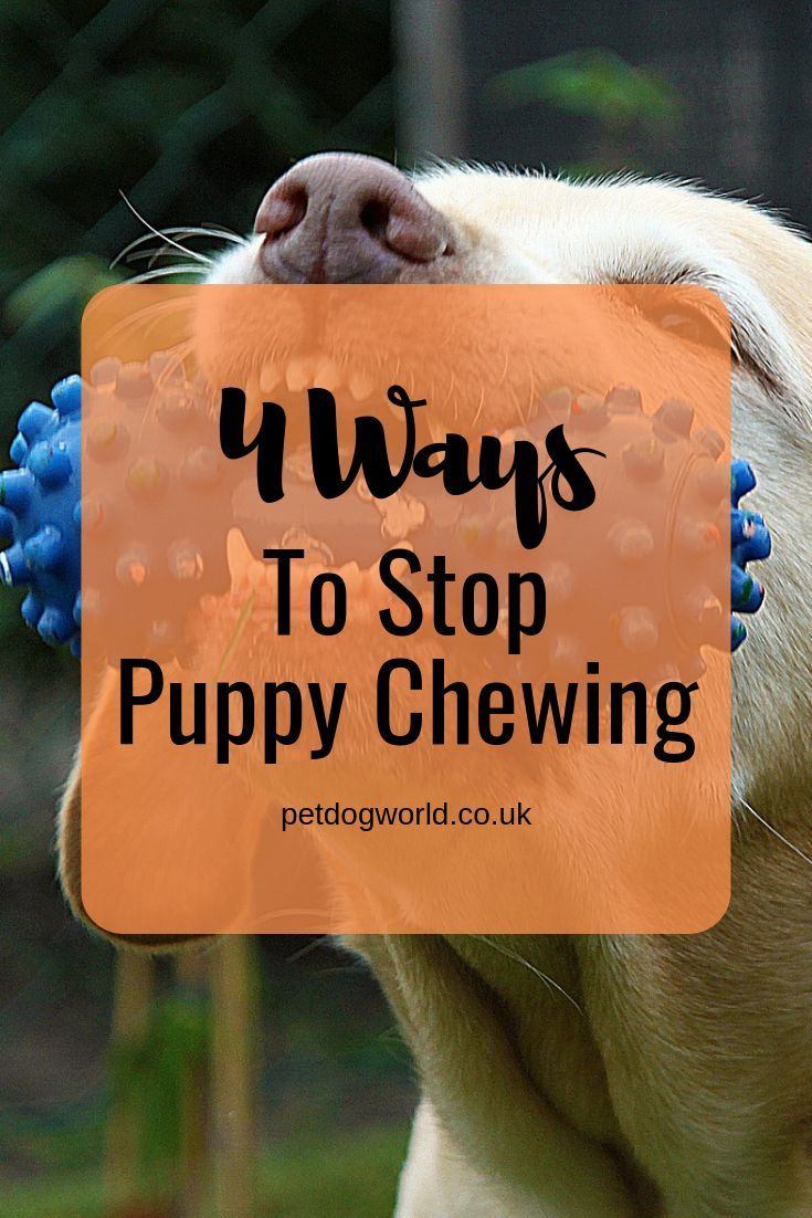 4 Ways To Stop Puppy Chewing Puppies, Puppy chewing, Dog