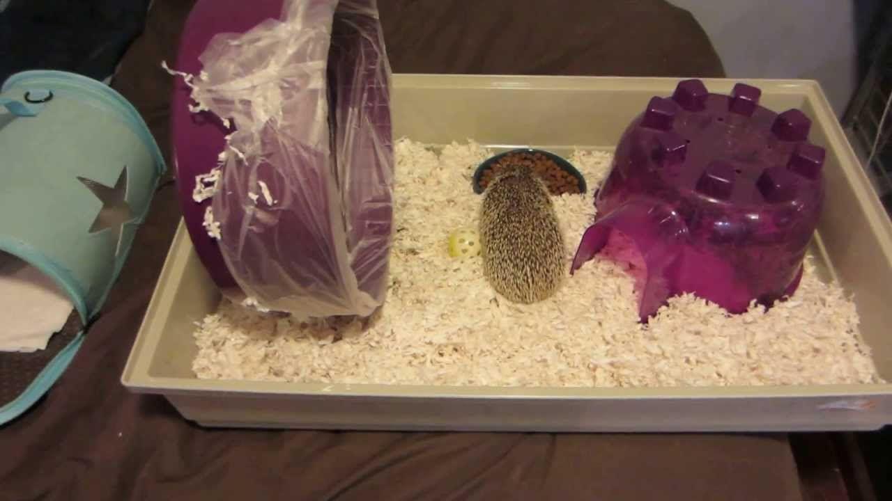 Hedgehog care tips keeping a clean wheel hedgehog care