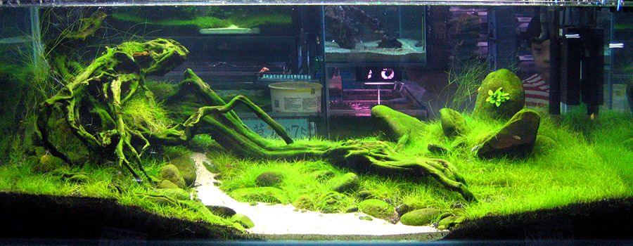 AQUASCAPE GALLERY   Google Search