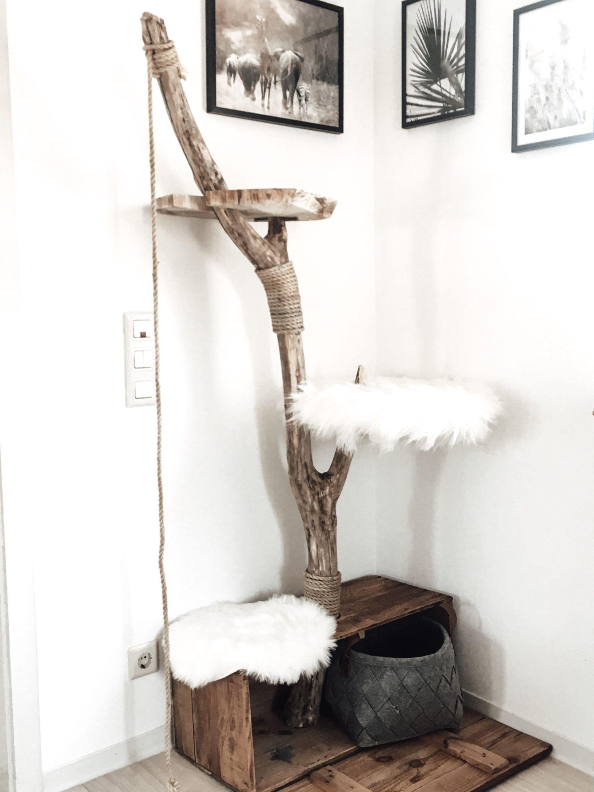 Photo of cat diy furniture