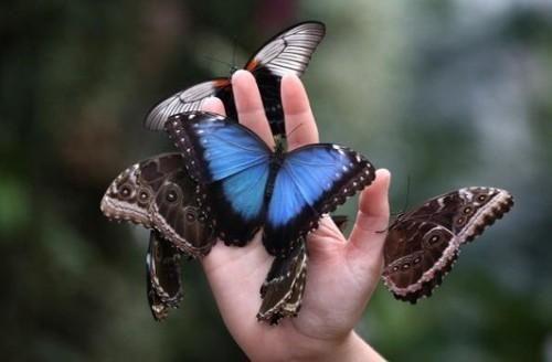 Plantillas de mariposa para imprimir gratis