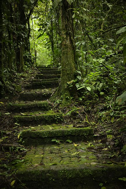 Rain Forest in Costa Rica| Whysall Photography