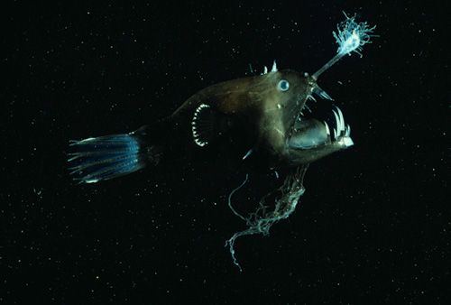 17 best images about in the deep sea on pinterest | deep sea, Reel Combo