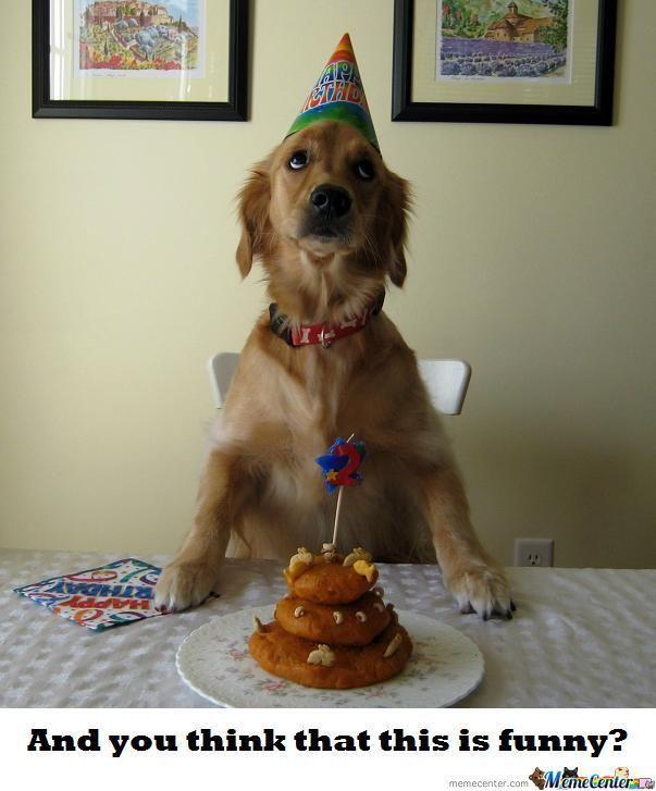 cc2a55d1d0d9a68879e0dc8bd75d8ca7 dog birthday meme the birthday thread! new bioware social,Birthday Meme Animal