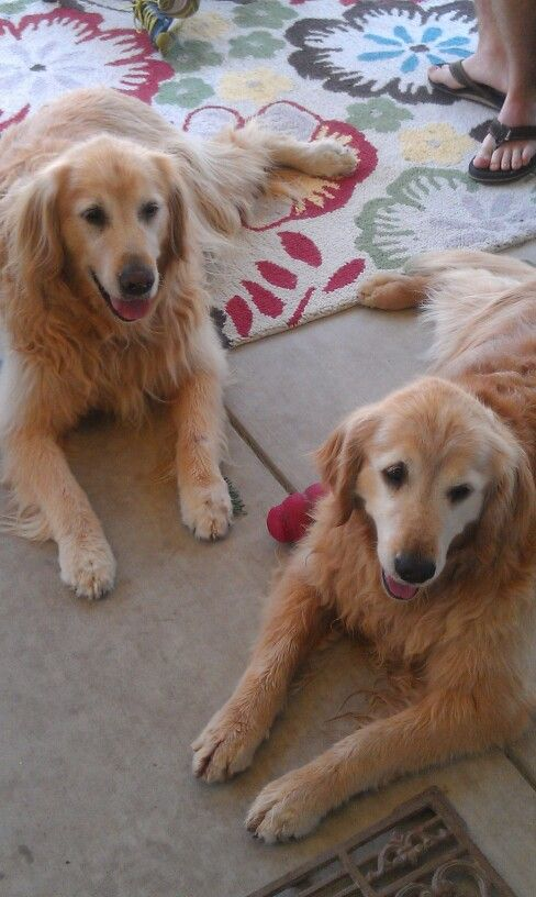 Sunny boy and Chloe enjoying a nice family BBQ with their Kong toy.