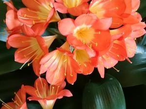 La photo du mois sera Orange • Hellocoton.fr