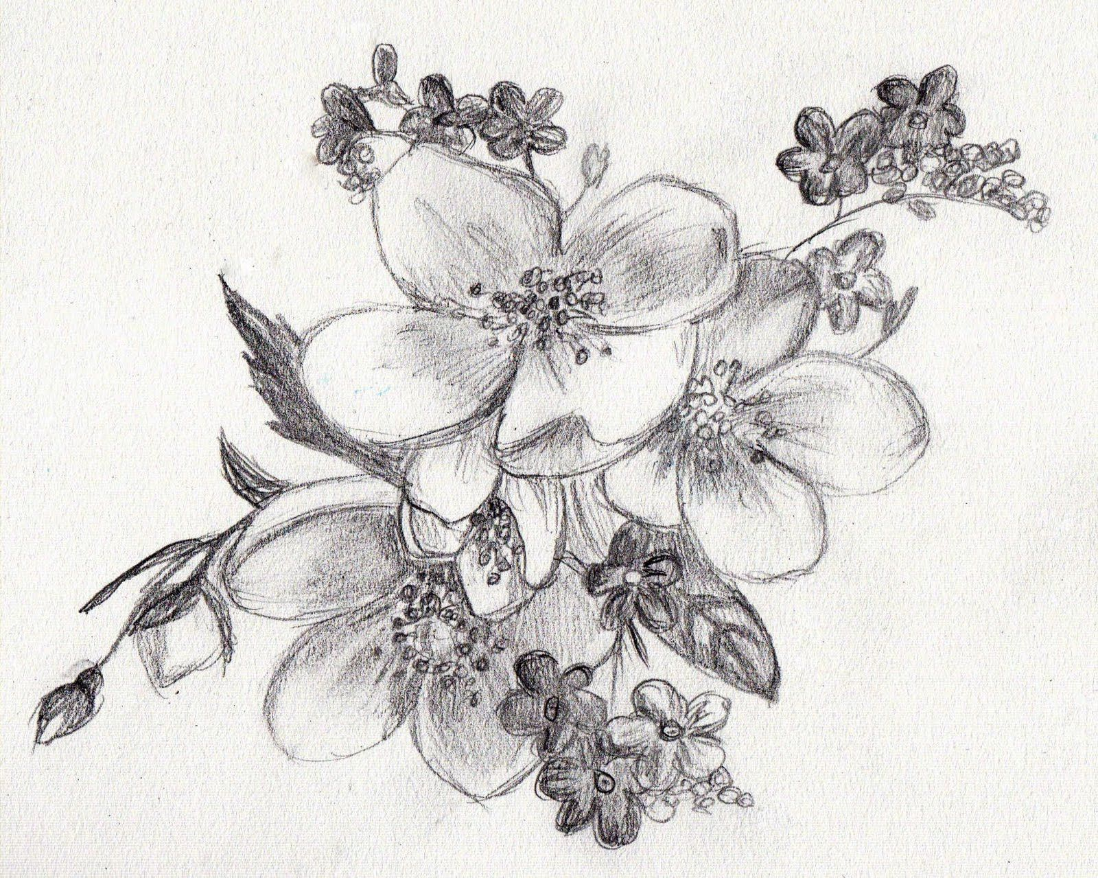 Image Result For Easy Sketches Of Flowers Drawing Pinterest