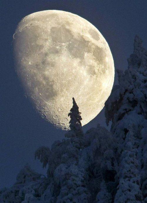 ❥Winter Moon