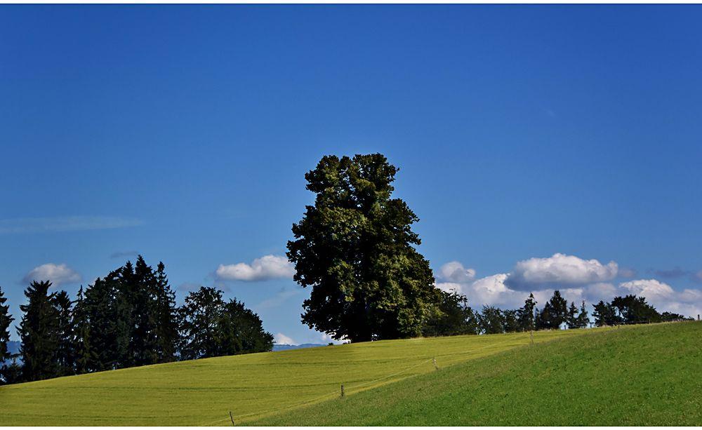 ...sommer #2... von Urs Guggisberg