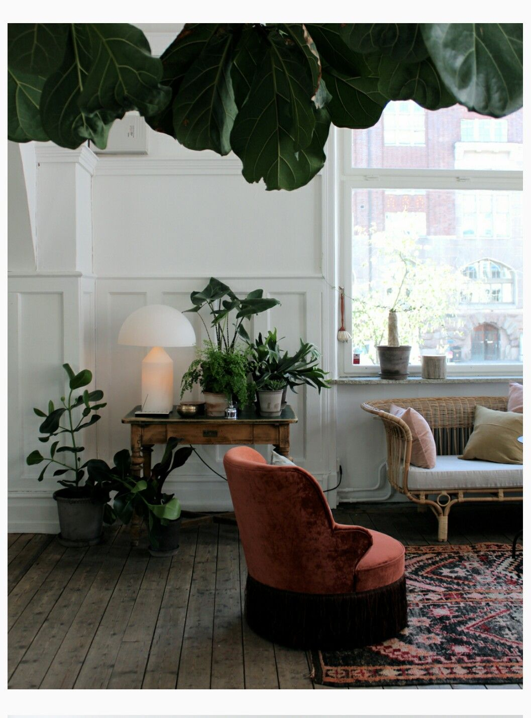Big Plants For Living Room Pin By Matilda Sjöö On Inredning Pinterest Hogar